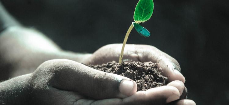 news-listing-plant-a-tree